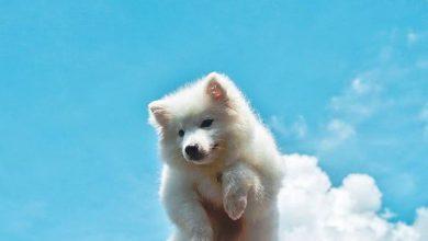 Große Hunde Bilder Kostenlos Herunterladen 390x220 - Große Hunde Bilder Kostenlos Herunterladen