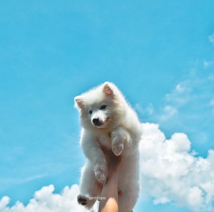 Große Hunde Bilder Kostenlos Herunterladen - Große Hunde Bilder Kostenlos Herunterladen