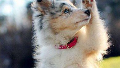 Große Hunderassen Bilder Für Facebook 390x220 - Große Hunderassen Bilder Für Facebook