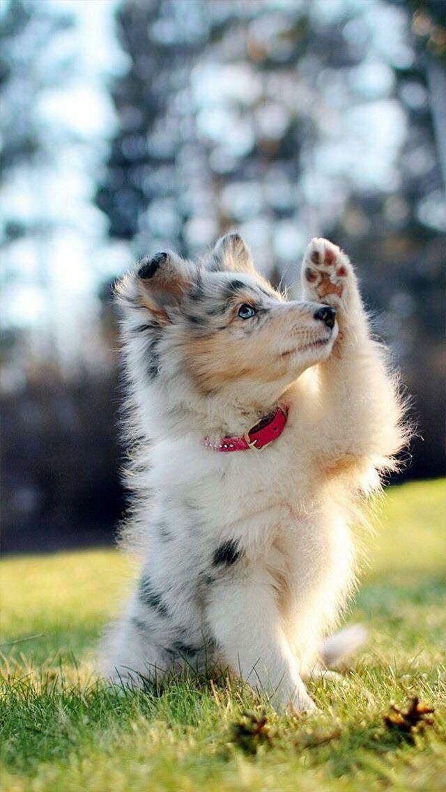 Große Hunderassen Bilder Für Facebook - Große Hunderassen Bilder Für Facebook