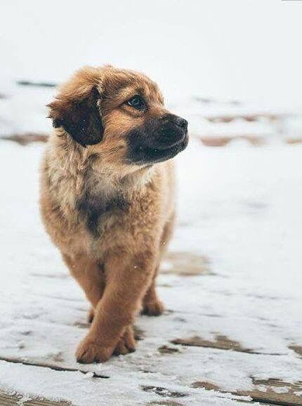 Große Hunderassen Kurzhaar - Große Hunderassen Kurzhaar