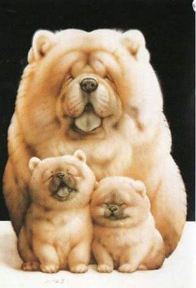 Große Langhaarige Hunderassen - Große Langhaarige Hunderassen