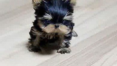 Hässlichster Hund Der Welt 390x220 - Hässlichster Hund Der Welt