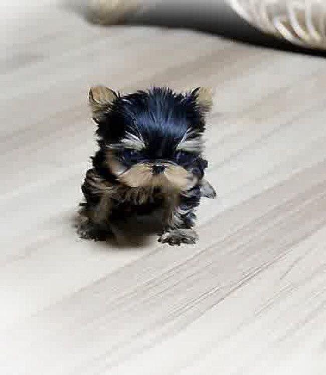Hässlichster Hund Der Welt - Hässlichster Hund Der Welt
