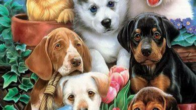 Hübsche Hunderassen 390x220 - Hübsche Hunderassen
