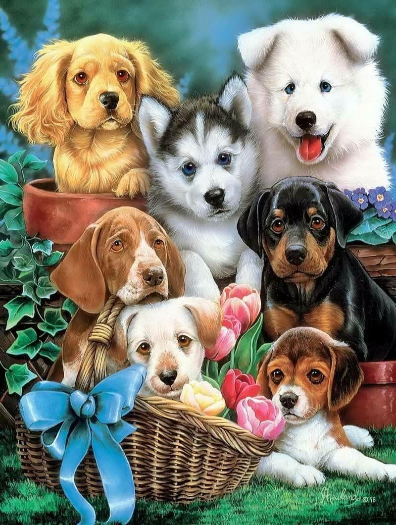 Hübsche Hunderassen - Hübsche Hunderassen