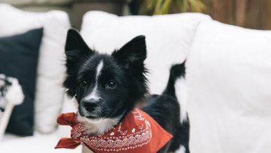 Hunde Bilder Kostenlos Runterladen Für Whatsapp Bilder Und Sprüche