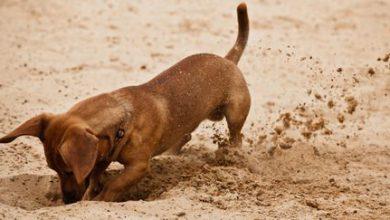 Heisser Hund 390x220 - Heisser Hund
