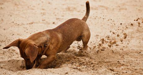Heisser Hund - Heisser Hund