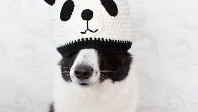 Hirtenhund Rassen 390x220 - Hirtenhund Rassen