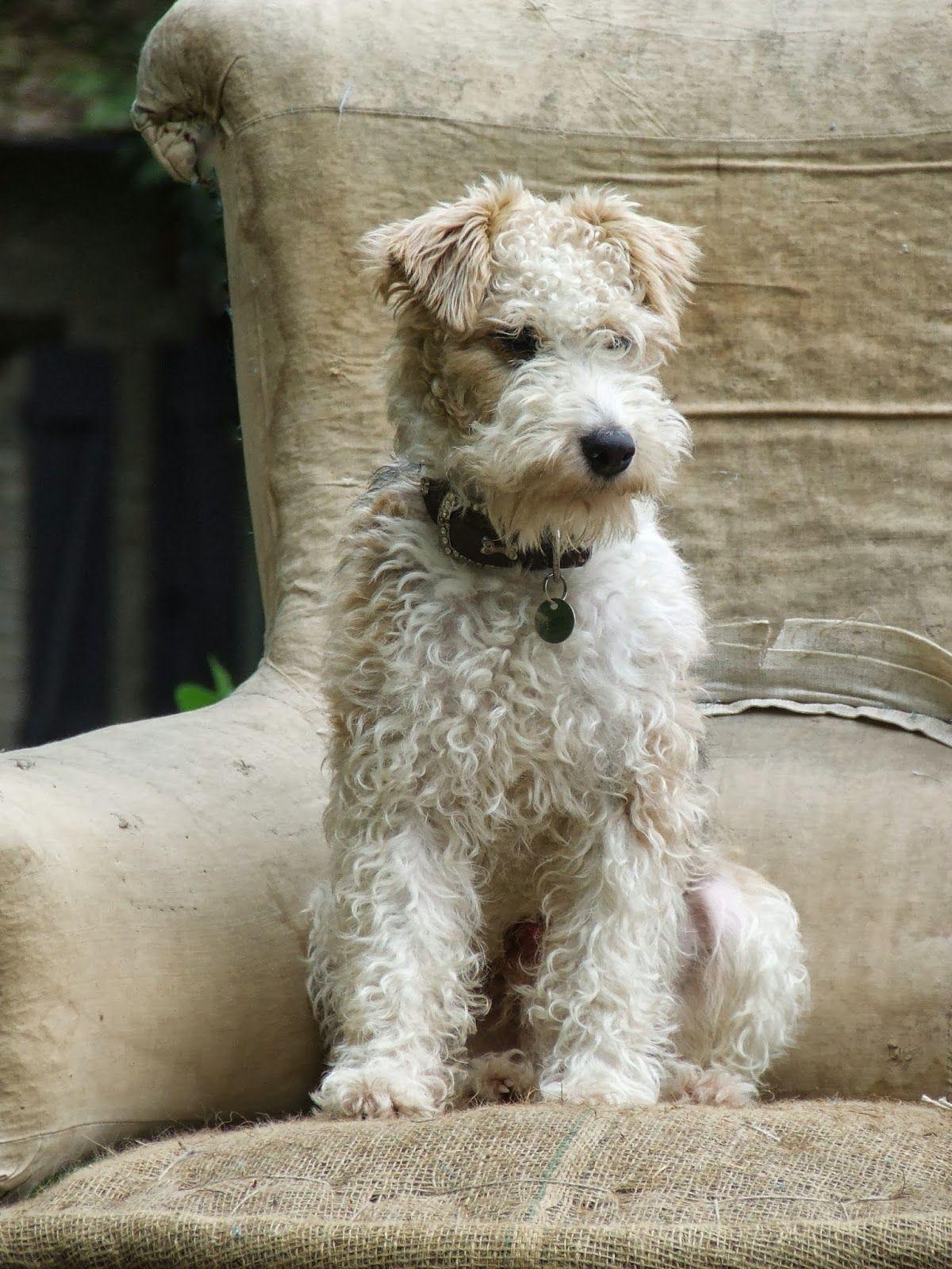 Hirtenhunde Bilder Kostenlos Herunterladen - Hirtenhunde Bilder Kostenlos Herunterladen