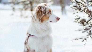 Hund Abzugeben 390x220 - Hund Abzugeben