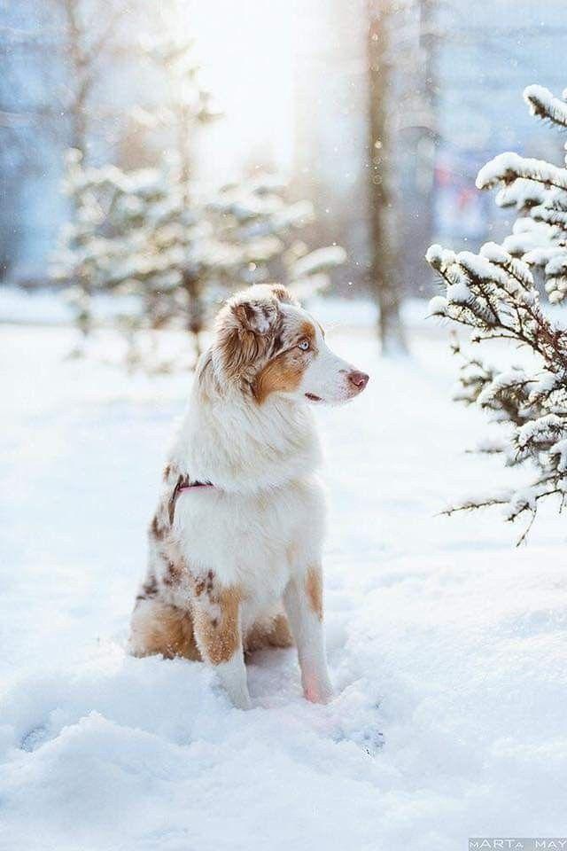 Hund Abzugeben - Hund Abzugeben