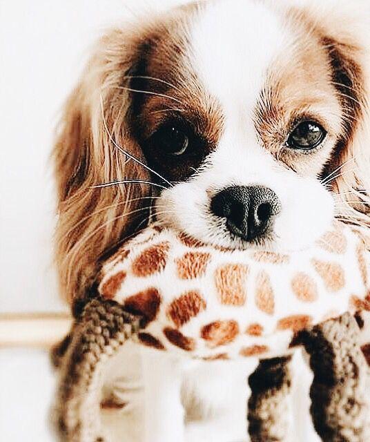 Hund Beschreibung - Hund Beschreibung
