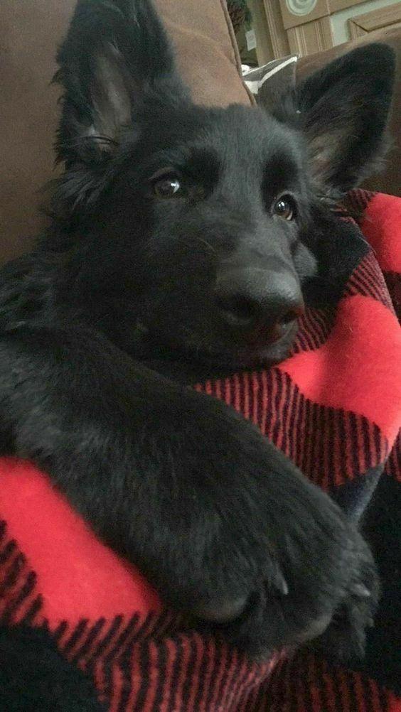 Hund Braun - Hund Braun