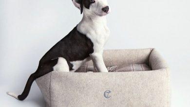 Hund Englische Rasse 390x220 - Hund Englische Rasse