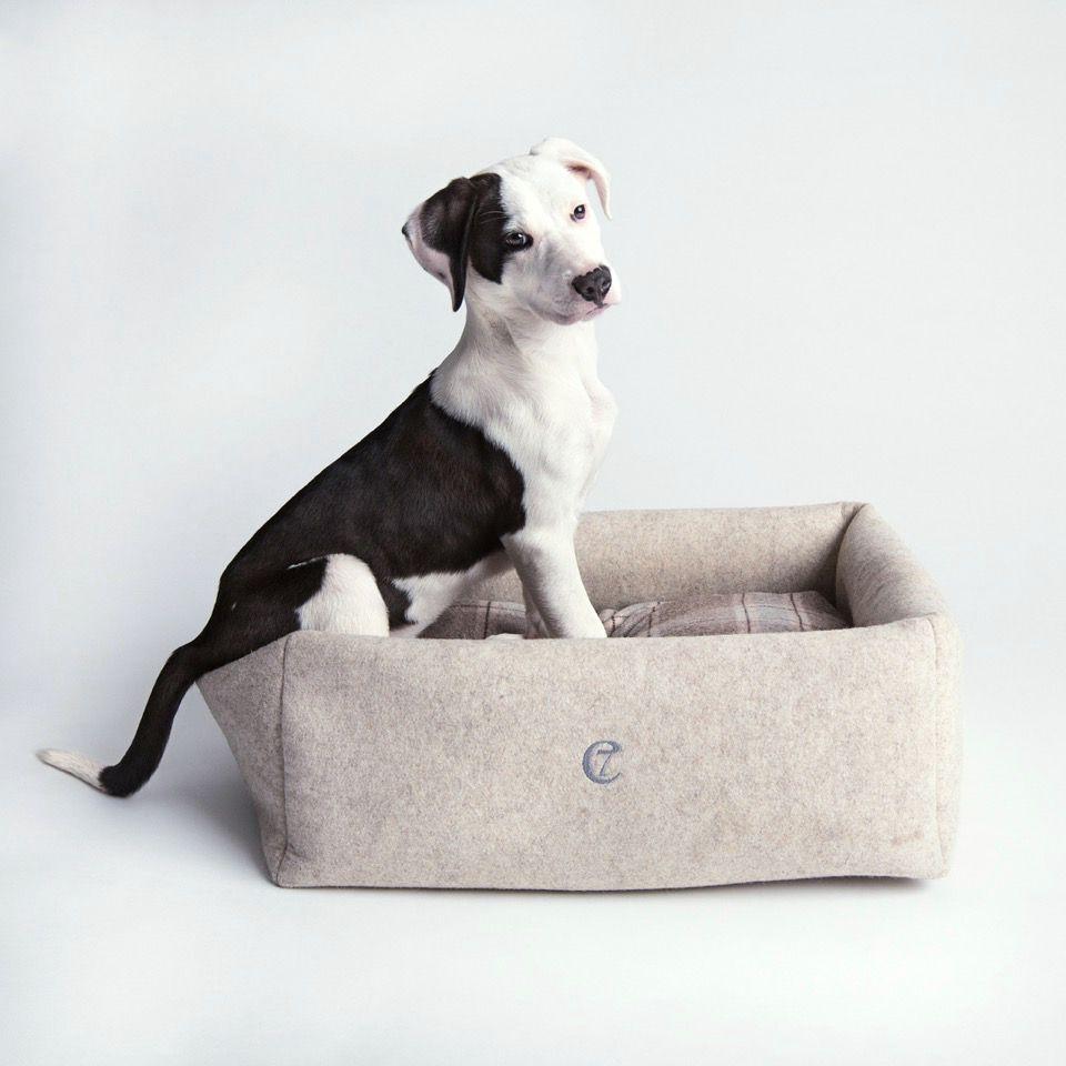 Hund Englische Rasse - Hund Englische Rasse