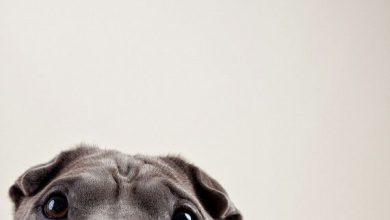 Hund Fieber 390x220 - Hund Fieber