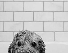 Hund Groß Schwarz Weiß 279x220 - Hund Groß Schwarz Weiß