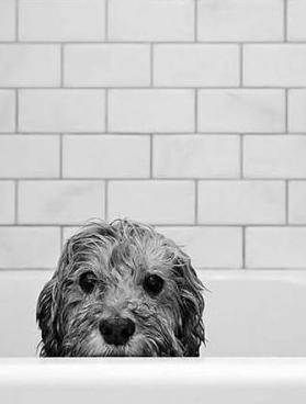 Hund Groß Schwarz Weiß - Hund Groß Schwarz Weiß