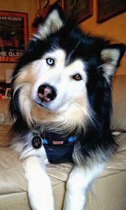 Hund Kennel 181x300 - Hund Kennel