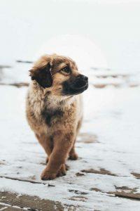 Hund Klein Schwarz 200x300 - Hund Klein Schwarz