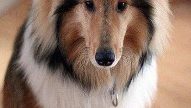 Hund Kosten 390x220 - Hund Kosten