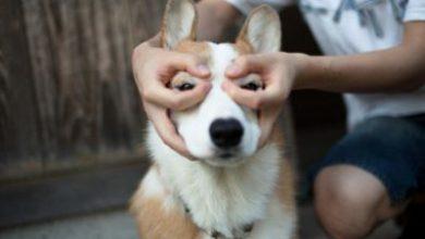 Hund Kurzhaar Groß 390x220 - Hund Kurzhaar Groß