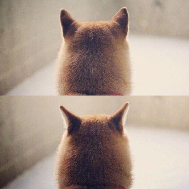 Hund Labrador Bilder Für Whatsapp - Hund Labrador Bilder Für Whatsapp