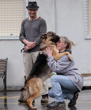Hund Labrador Bilder - Hund Labrador Bilder