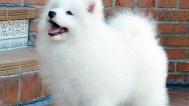 Hund Mit Großen Schlappohren 390x220 - Hund Mit Großen Schlappohren