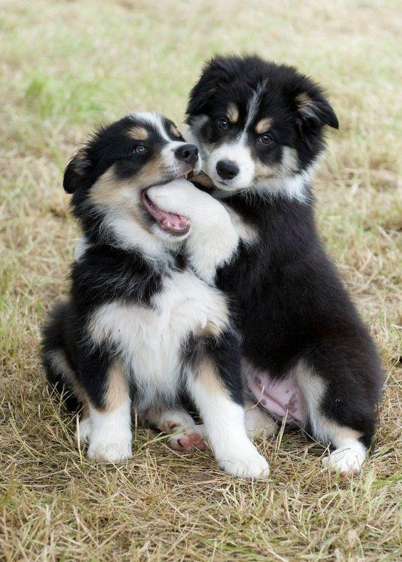 Hund Mit N - Hund Mit N