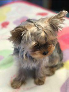 Hund Mit Schlappohren Rasse 225x300 - Hund Mit Schlappohren Rasse