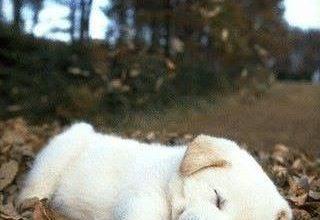 Hund Schlappohren 320x220 - Hund Schlappohren