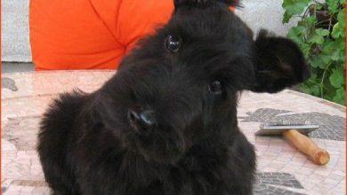 Hund Schwarz Weiß Braun 390x220 - Hund Schwarz Weiß Braun