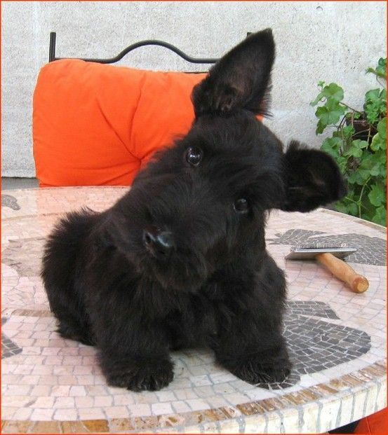 Hund Schwarz Weiß Braun - Hund Schwarz Weiß Braun