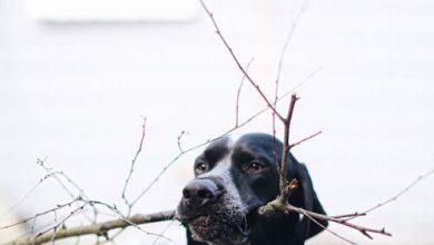 Hund Terrier Rassen 390x220 - Hund Terrier Rassen