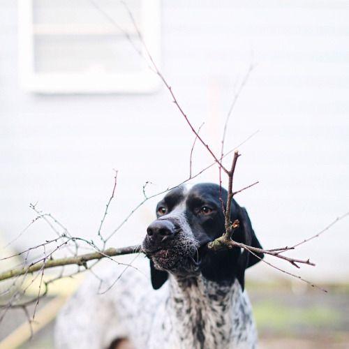 Hund Terrier Rassen - Hund Terrier Rassen