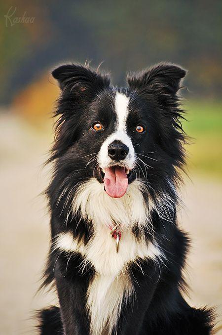 Hund Trächtig - Hund Trächtig