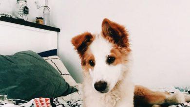 Hund Weiß Groß 390x220 - Hund Weiß Groß