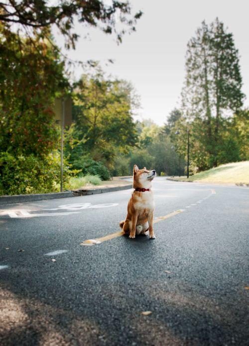 Hund Welpe - Hund Welpe
