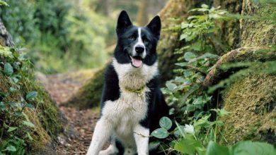 Hunde Babys Bilder Für Facebook 390x220 - Hunde Babys Bilder Für Facebook