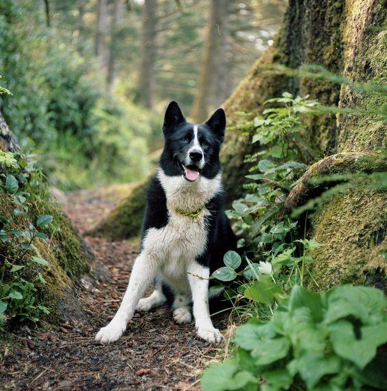 Hunde Babys Bilder Für Facebook - Hunde Babys Bilder Für Facebook