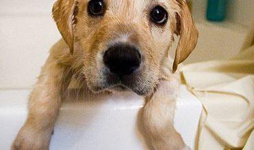 Hunde Babys Bilder Kostenlos Herunterladen 371x220 - Hunde Babys Bilder Kostenlos Herunterladen