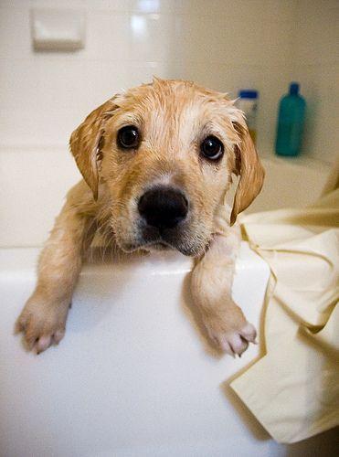 Hunde Babys Bilder Kostenlos Herunterladen - Hunde Babys Bilder Kostenlos Herunterladen