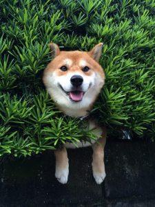 Hunde Bilder Ausdrucken 225x300 - Hunde Bilder Ausdrucken
