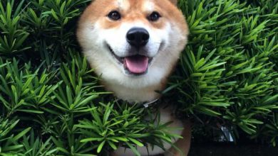 Hunde Bilder Ausdrucken 390x220 - Hunde Bilder Ausdrucken