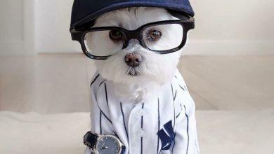 Hunde Bilder Ausdrucken Für Facebook 390x220 - Hunde Bilder Ausdrucken Für Facebook