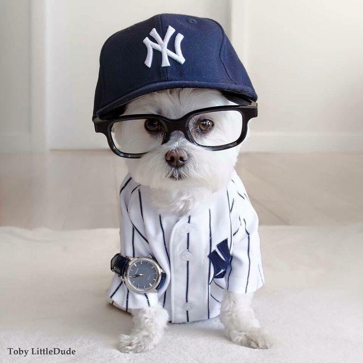 Hunde Bilder Ausdrucken Für Facebook - Hunde Bilder Ausdrucken Für Facebook