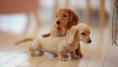 Hunde Bilder Ausdrucken Für Whatsapp 390x220 - Hunde Bilder Ausdrucken Für Whatsapp